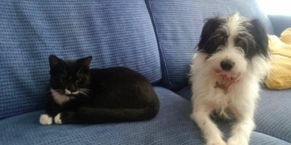 Chaplin e Pongo